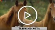 stasera in tv guarda programmi televisivi online cowboy TV sport ippico rodeo canale televisivo video streaming viblix tvweb su internet gratis italia