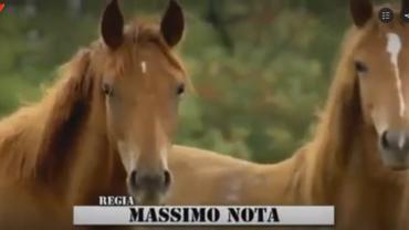 cowboy_tv_canale_tv_programmi_tv_stasera_cavalli_viblix_webtv_online_streaming