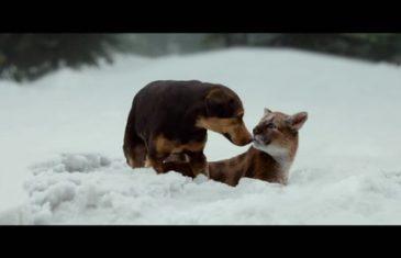 Film Al Cinema Per Bambini - Un viaggio a Quattro Zampe: Trama, Trailer, Curiosità